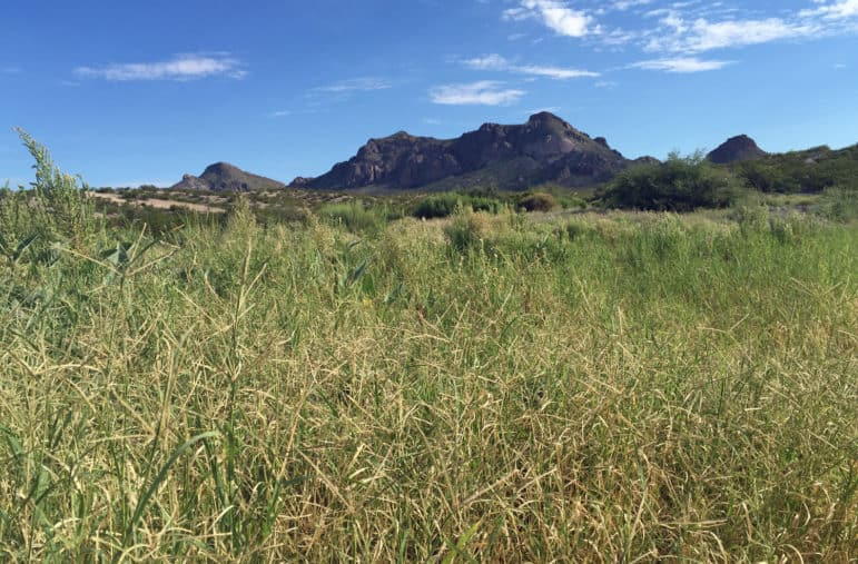 The Doña Ana Mountains in the Organ Mountains-Desert Peaks National Monument